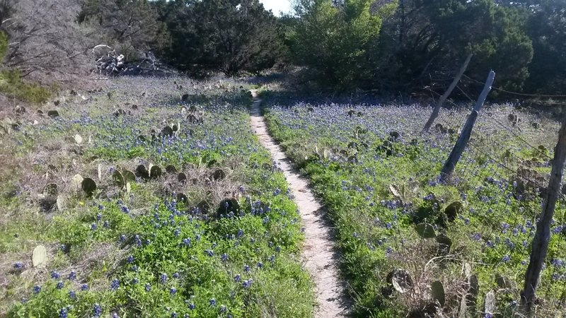Running among the Texas blue bonnets and cactus on the Cleburne State Park Trail