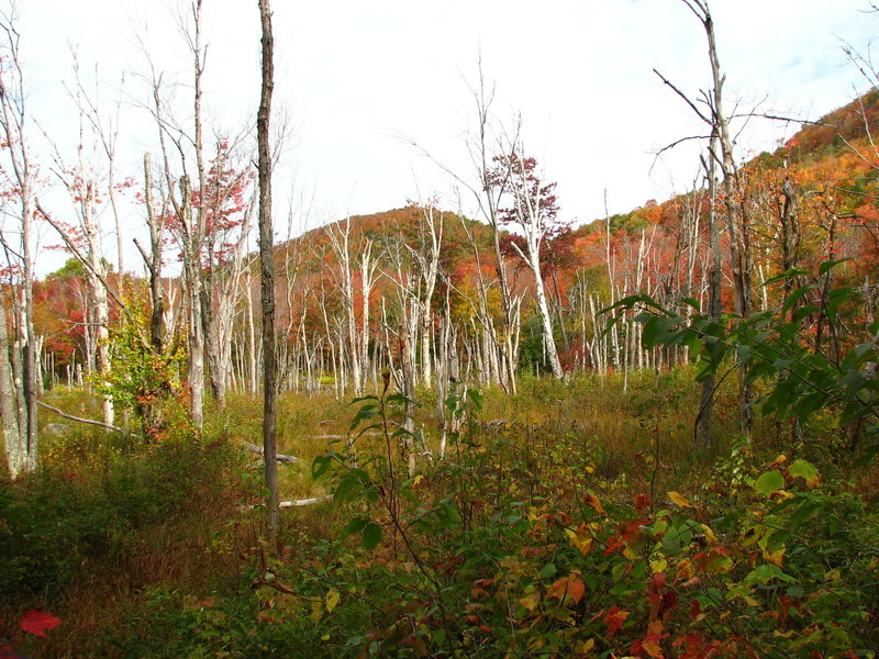 Nature vivante et morte - on the Grand Brule Trail