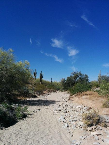 Desert wash along the Warpaint - Corona Loop Trail
