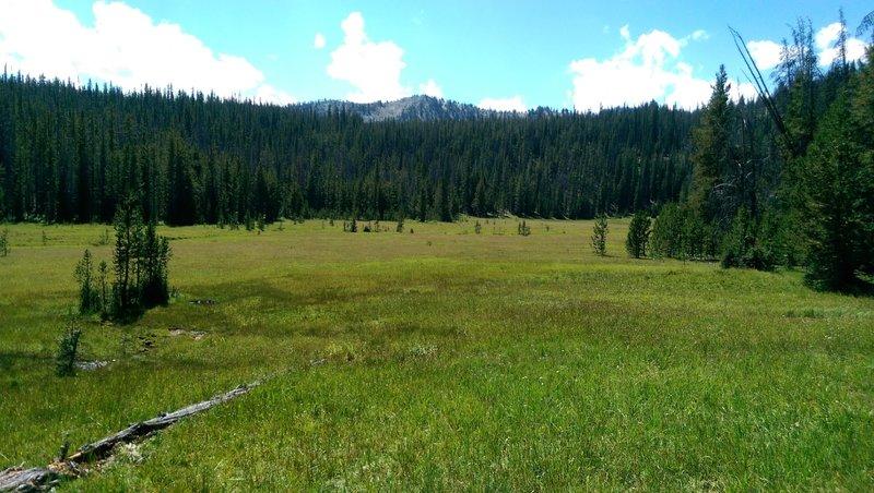 Look for elk and deer.