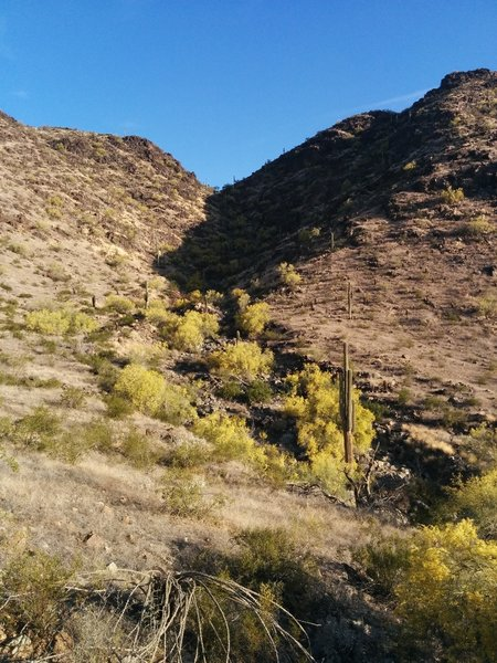 South Mountain drainage - on the Bursera Trail