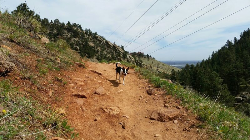 The Mesa Trail overlooking NCAR and the valley below. Dogs are allowed off leash if they have their Blue tags