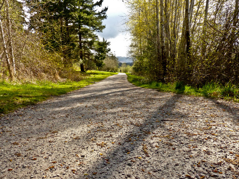 Flat, crushed gravel section of the Lake Padden Loop on a fall day.
