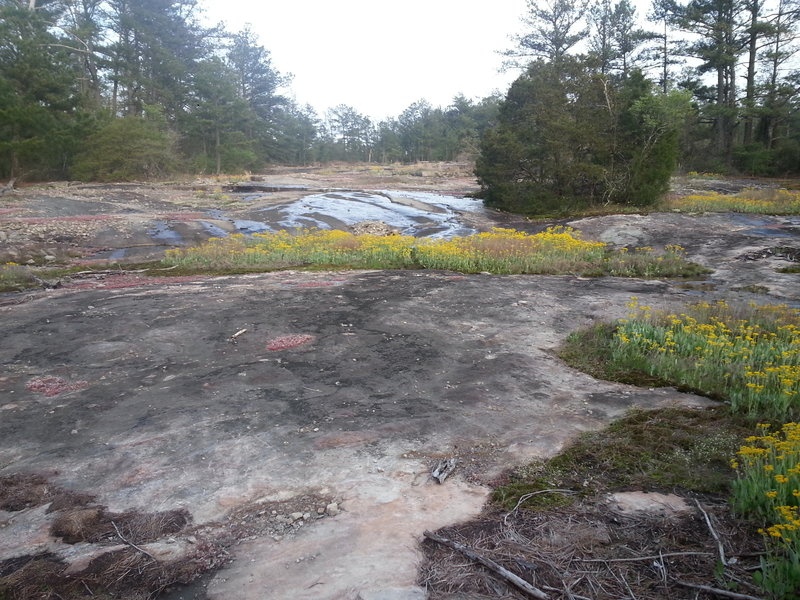 Lichen, wildflowers, and other plant life atop granite outcropping.