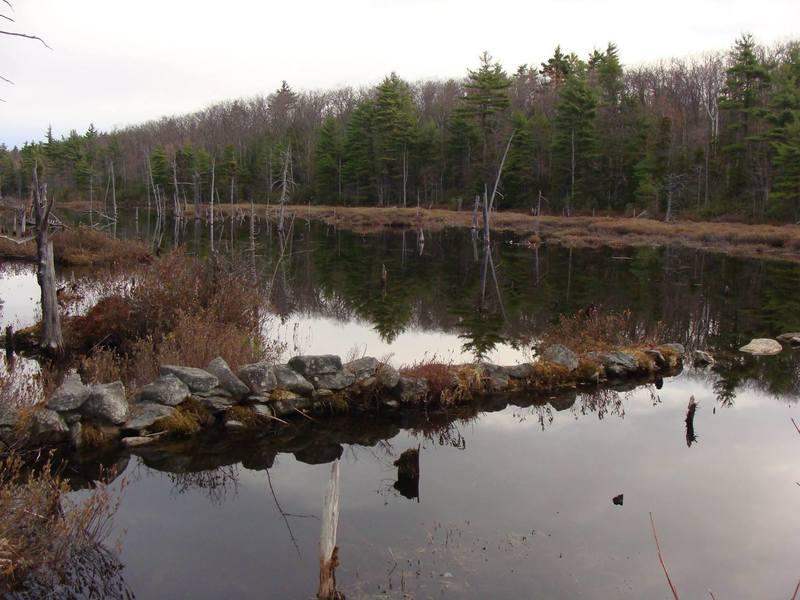 Binney Pond view