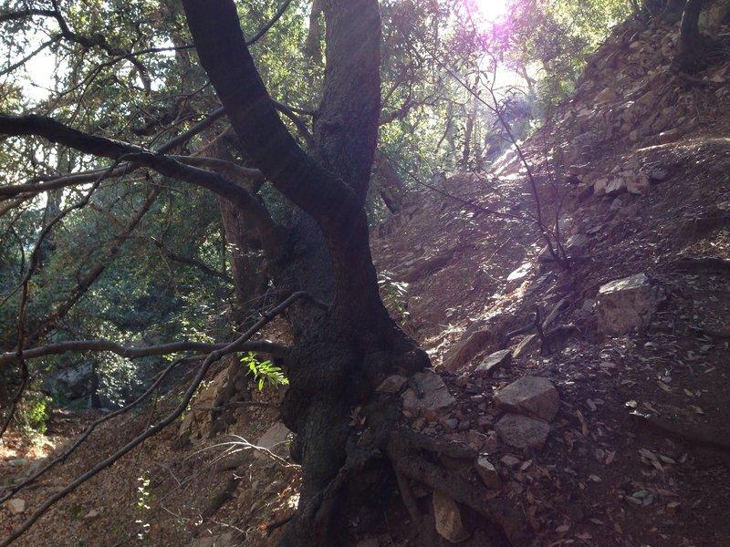 Lush treed area near the waterfall.