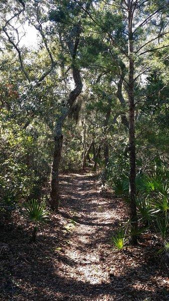 Shady tree cover, singletrack