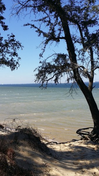 Tree with a rope swing on the bay - stop for a swim!