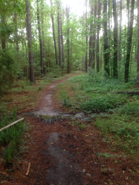 The only respite you'll get on the singletrack.