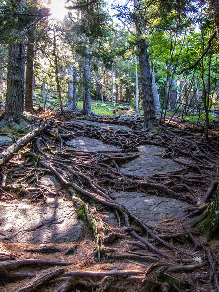 The ultimate rocks and roots trail.