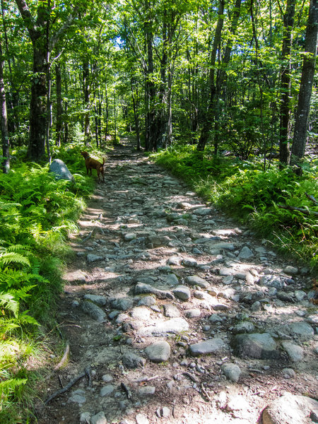 """The """"cobblestone"""" path that's the extension of the Midstate Trail."""