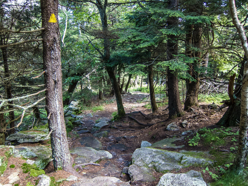 The WAPACK trail between Mt Watatic and Nutting Hill provides lots of technical rocks.