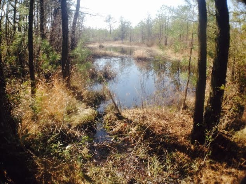 Small swamps can be found throughout the trail.