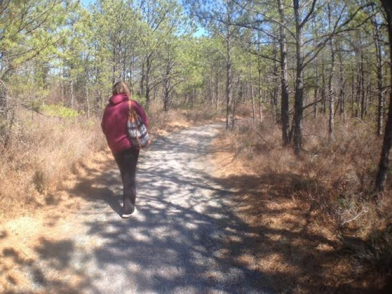 Towards the end of the trail, you get a view that allows you to see the beautiful trees of the Pine Barrens.