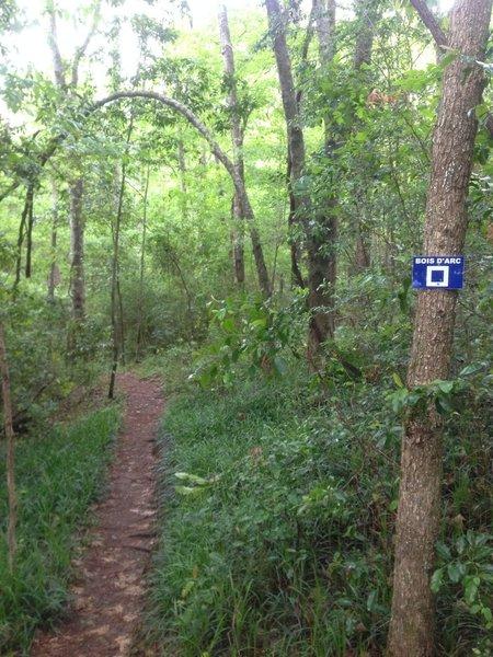 Top of Bois d'Arc Trail