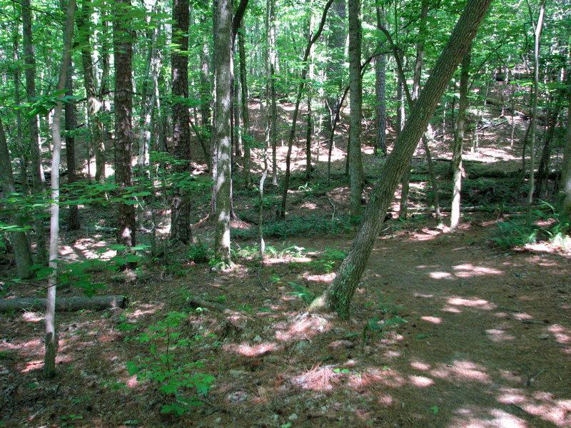 Path Company Mill Trail Umstead NC SP 0056