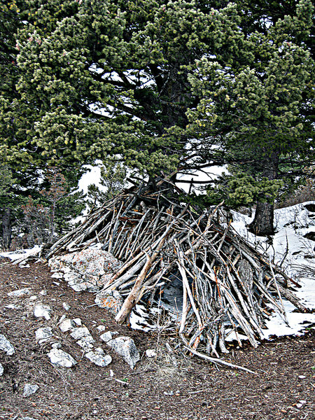 Stick fort on Drinking Horse Mountain.