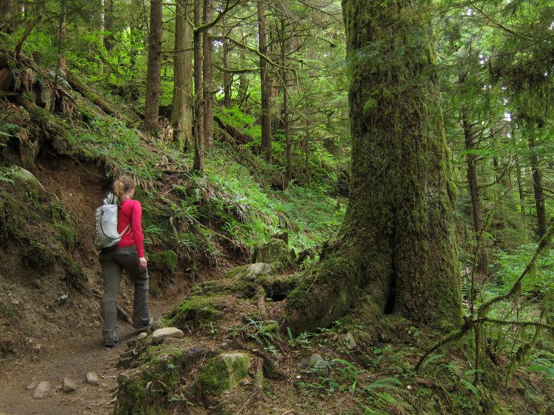 Hiker on Lake 22 Trail