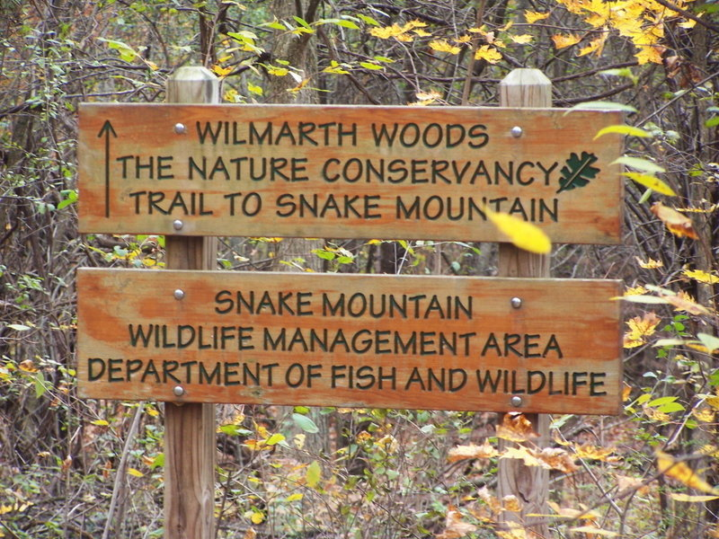 Welcome to Wilmarth Woods