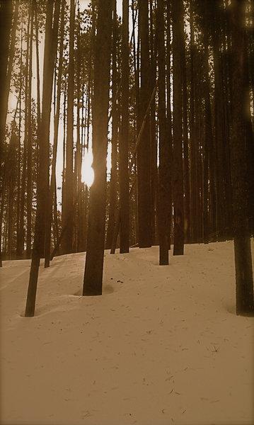 Deep winter snow along the Chestnut Mountain Trail