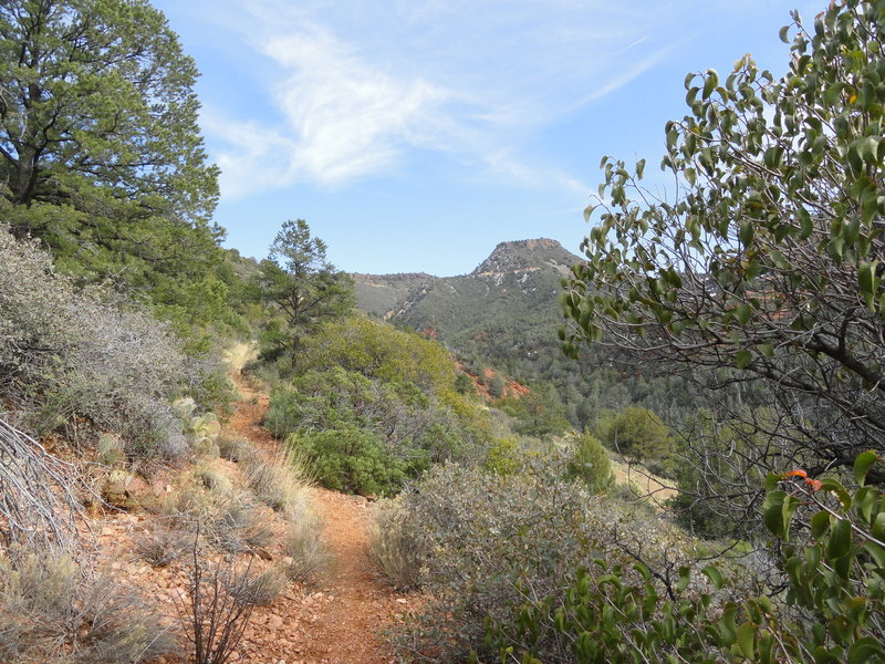 View looking up Casner Canyon