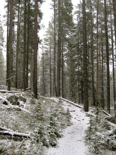 Snowy, spring Coffin Lakes Trail