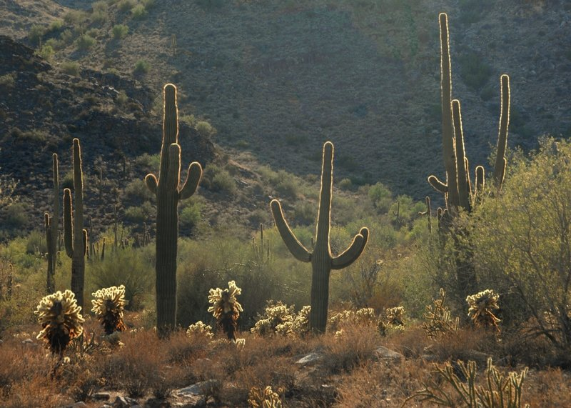 Sonoran cactus-scape from the Waterfall Trail  (