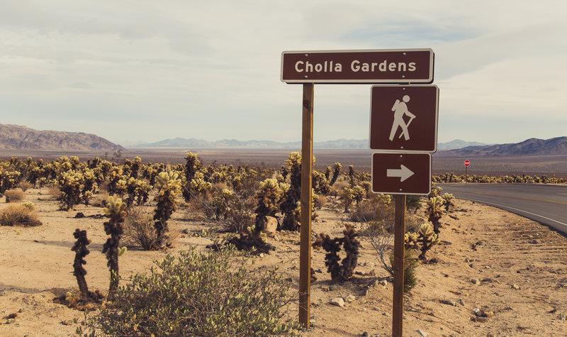 Cholla Cactus Garden signage