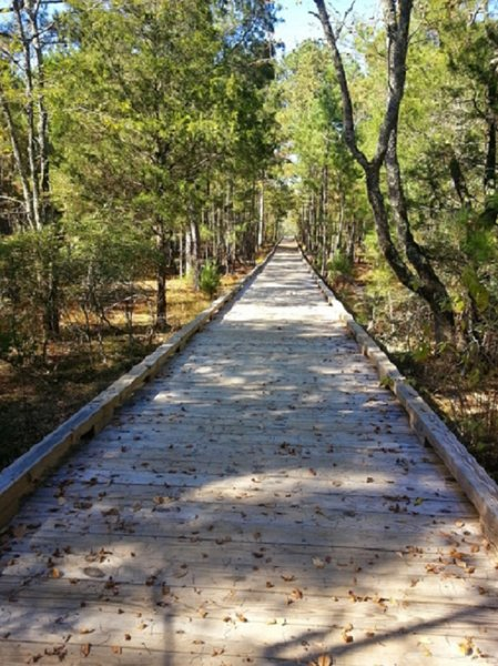 Boardwalk leading to Panola Mtn. Outlook.