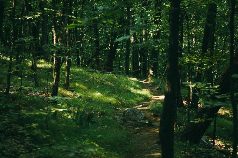 Beautiful wooded Wilkinson Memorial Trail
