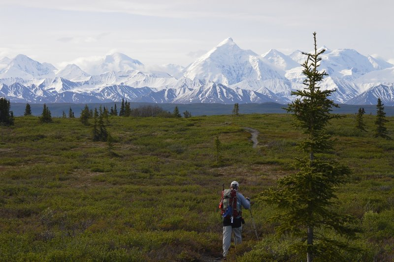 Hiking the McKinley Bar Trail towards the McKinley River with the Alaska Mountain Range as a backdrop.  Denali (Mt McKinley) is just out of the picture, to the right.  This is a short and easy hike, but one of the few trails in Denali National Park.