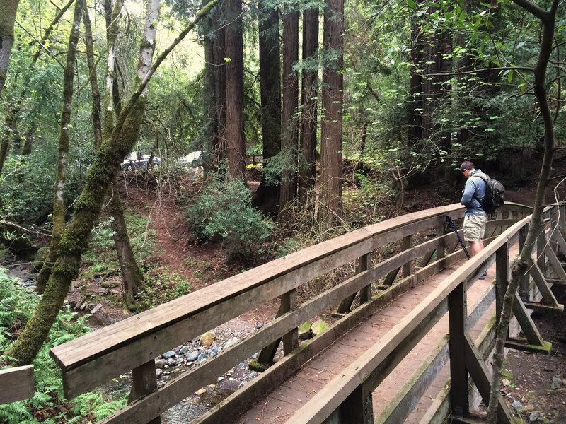 Sonoma Creek bridge and redwoods at trailhead parking lot.