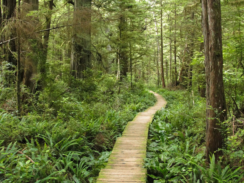 Olympic National Park Cape Alava Trail (by Miguel Vieira)