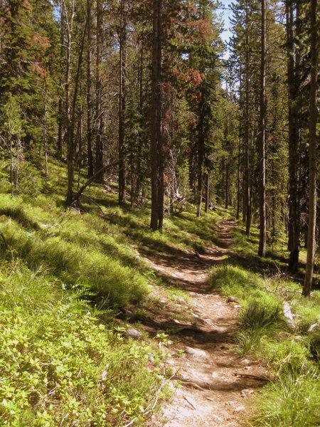 Glorious, wooded Sweeney Creek Trail