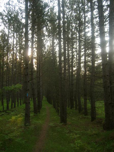 Tree rows.