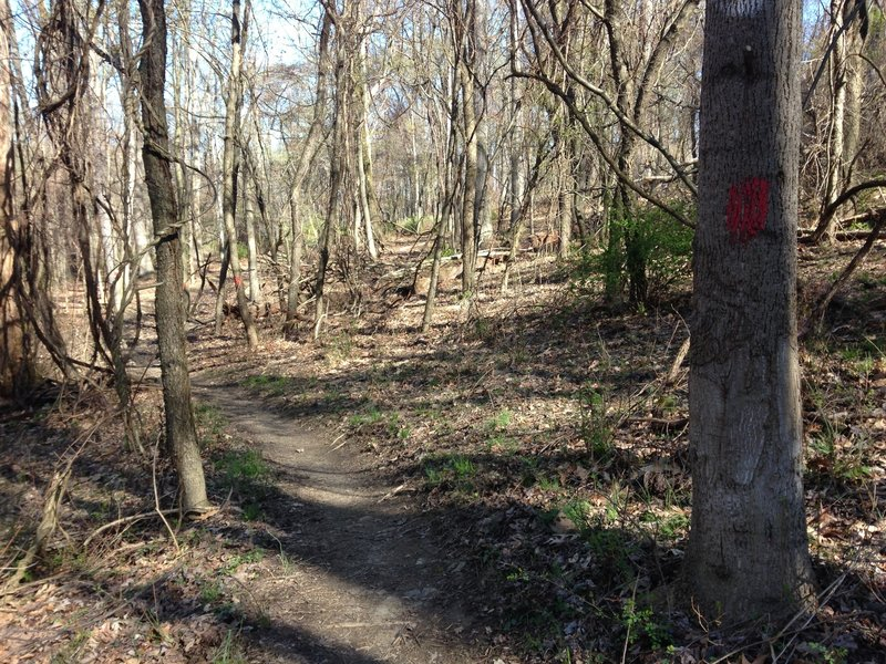 Red Blaze Bridle Trail in early spring