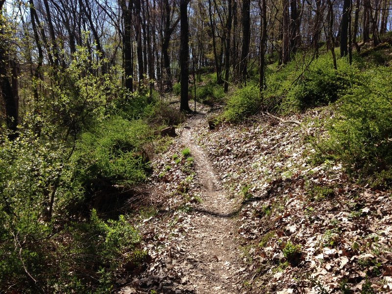 A section of the nature trails, which boast unmarked miles of trail.