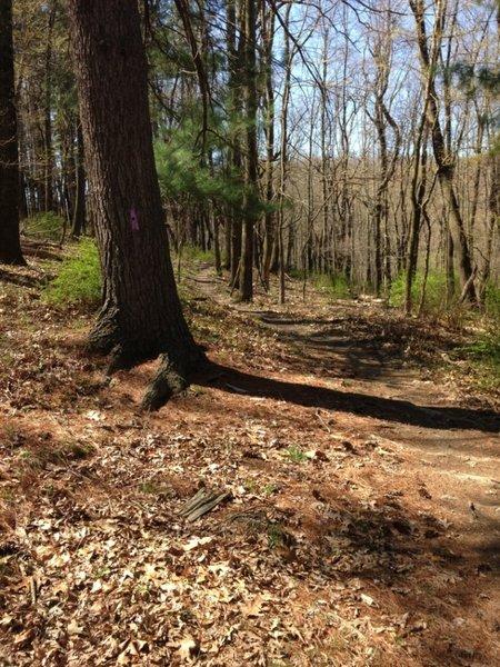 Trail blazing for the Koto Buki Trail