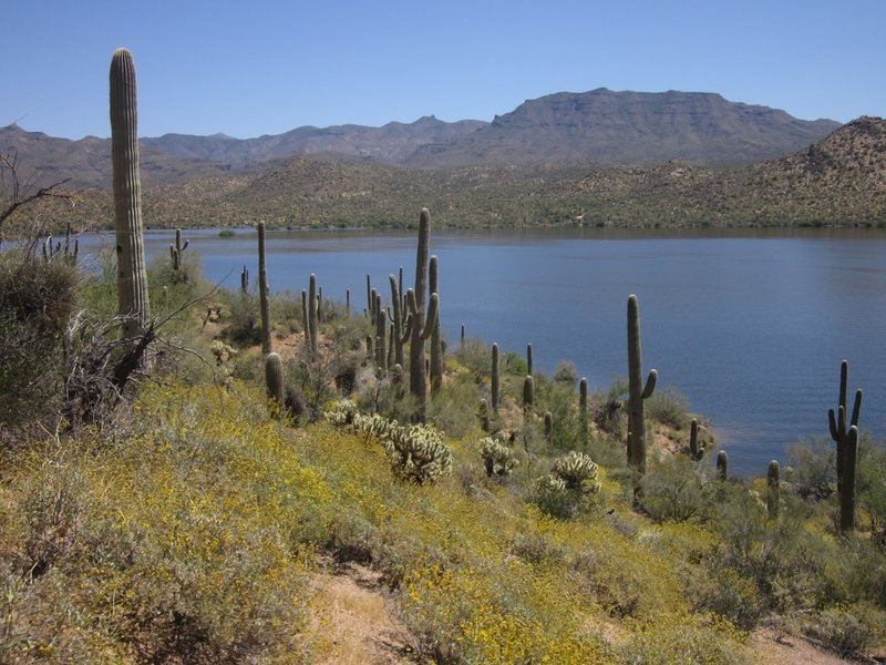 Bartlett Lake in all its glory - from the Palo Verde Trail