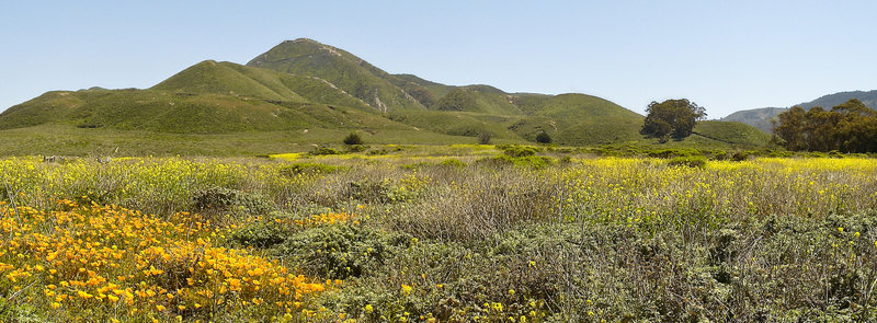 Valencia Peak from Bluff Trail in Montana de Oro State Park