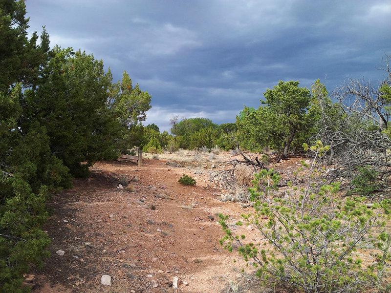 Cerro Vista Trail