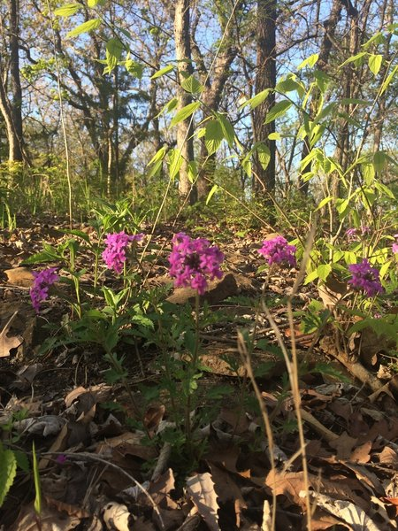 Spring blooms along the Orange Trail
