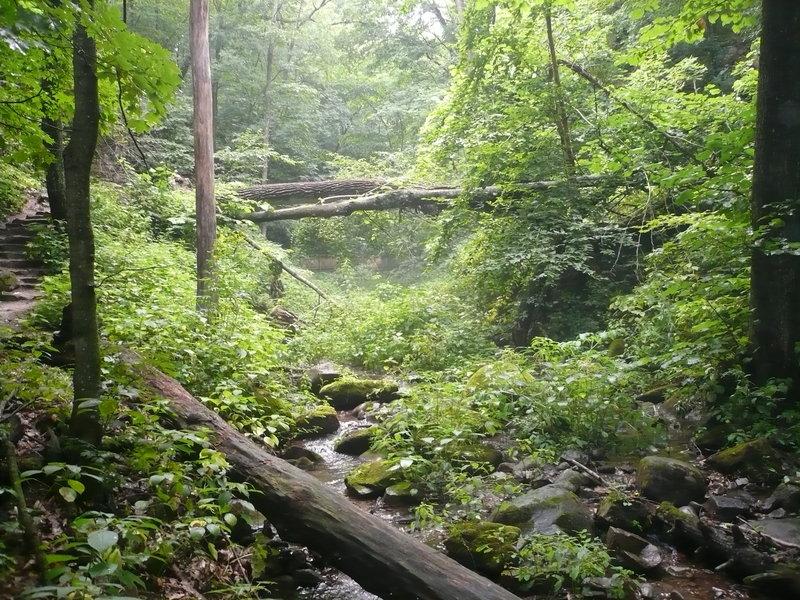 Dense forest/stream