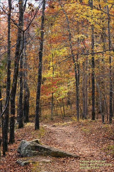 Walking Down The Yellow Rock Trail