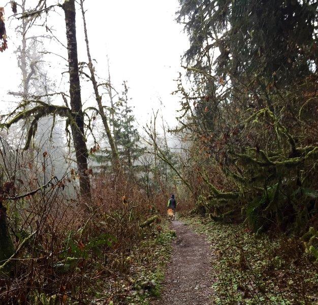 Lime Kiln Trail singletrack.