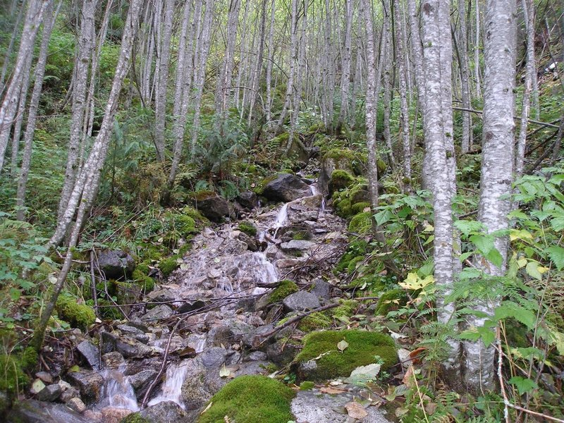 Creek along the Iron Goat Trail