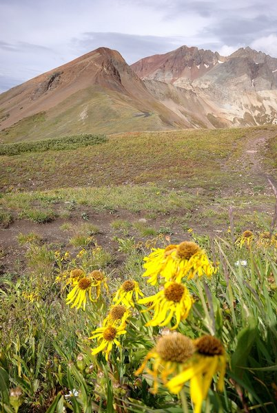 Flowers and 14ers on the Navajo Lake Trail