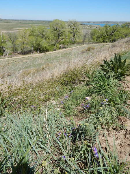A few early spring wildflowers on the ridge above Boulder Valley Ranch