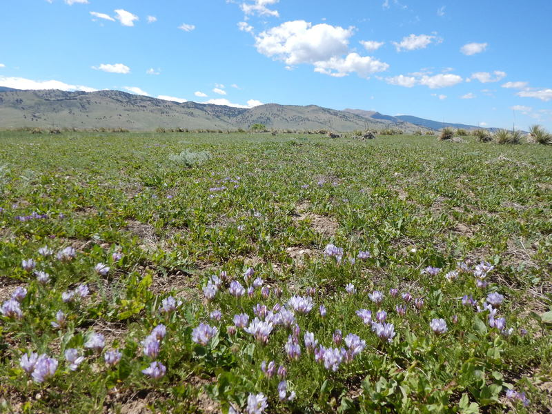 The Hidden Valley Trail is fairly barren, but does manage to grow some wildflowers