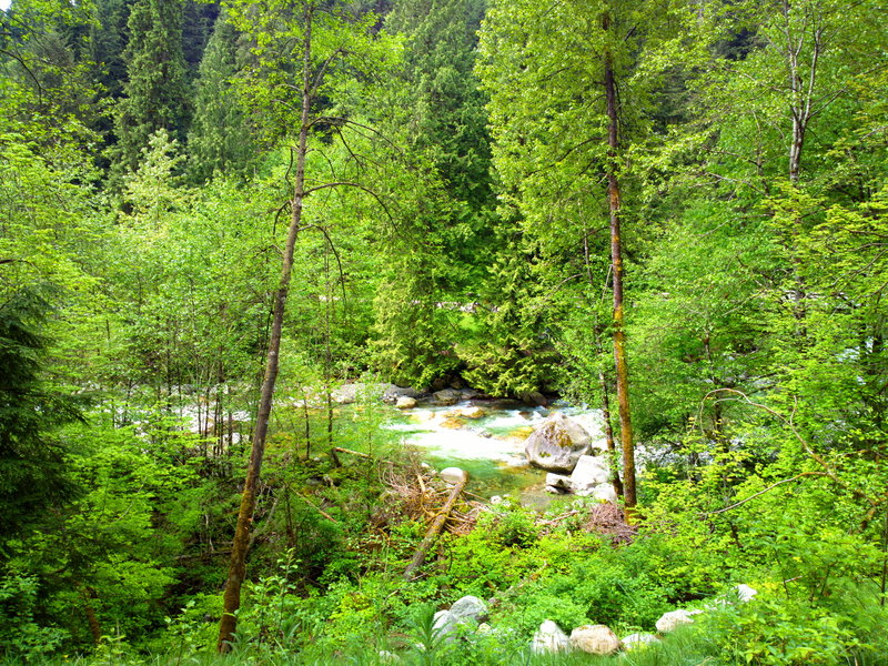 Walking around North Vancouver on the Lynn Loop Trail